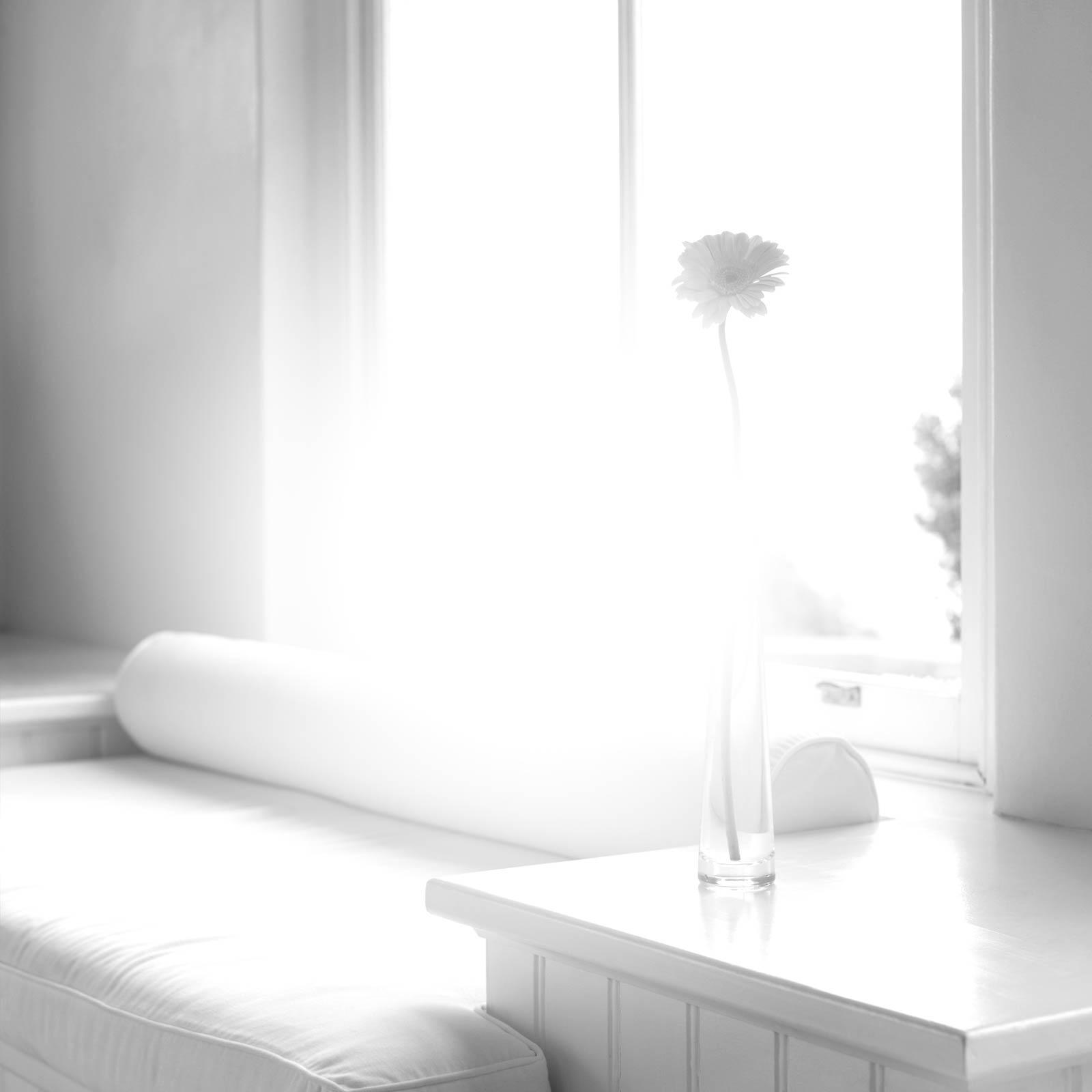 Mosquitera para todo tipo de ventanas blog tapicer as for Tapicerias castano